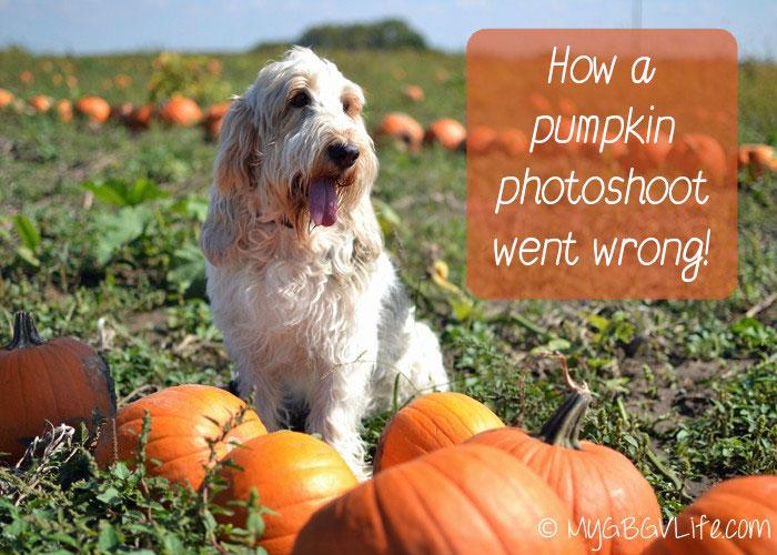 My GBGV Life a pumpkin photoshoot went wrong