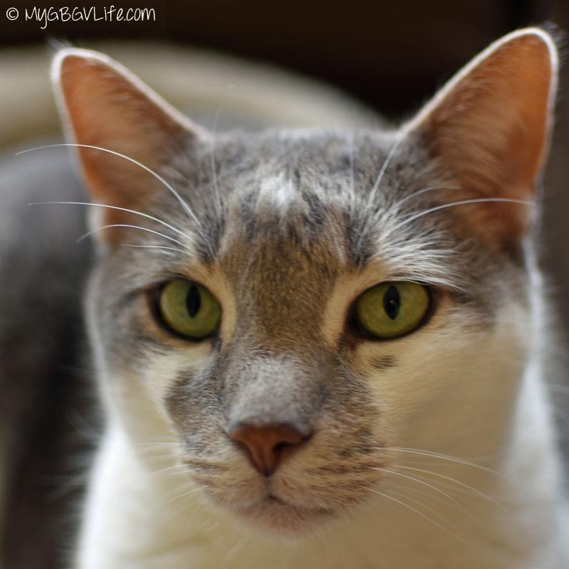 My GBGV Life cat bro Bert selfie