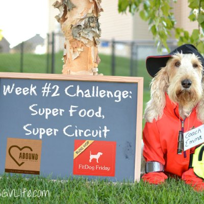 Super Food, Super Circuit – Fall Fitness Challenge Week 2 #FallFitDog