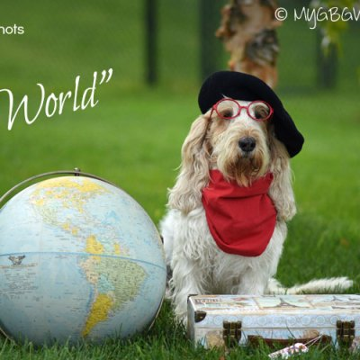 A Dog Of The World