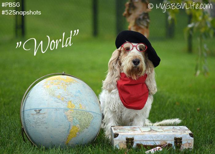 My GBGV Life a dog of the world