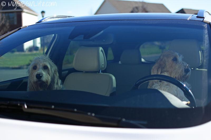 My GBGV Life Bailie and I cruising in the Kia Sorento