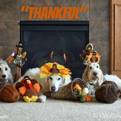 I am Thankful This Thanksgiving