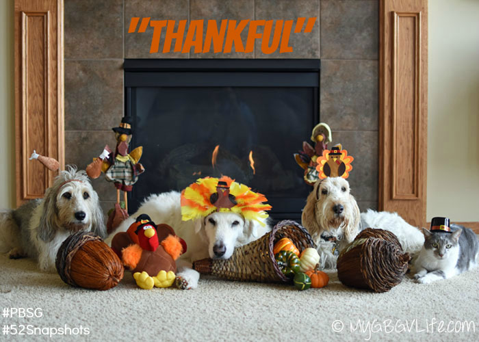 My GBGV Life I am thankful this Thanksgiving