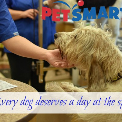 Spoil Your Dog With #PetSmartGrooming