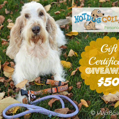 Personalized Collars And Other Fun Accessories For Dogs