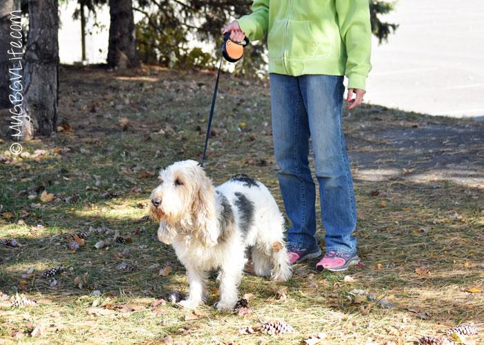 My GBGV Life on a retractable leash