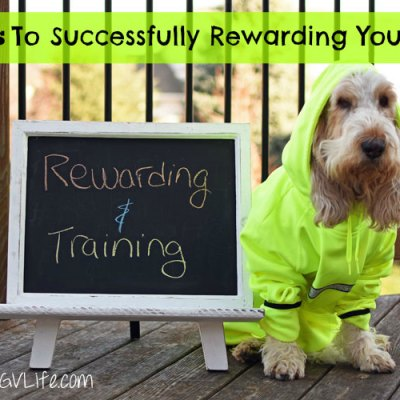 7 Tips To Successfully Rewarding Your Dog
