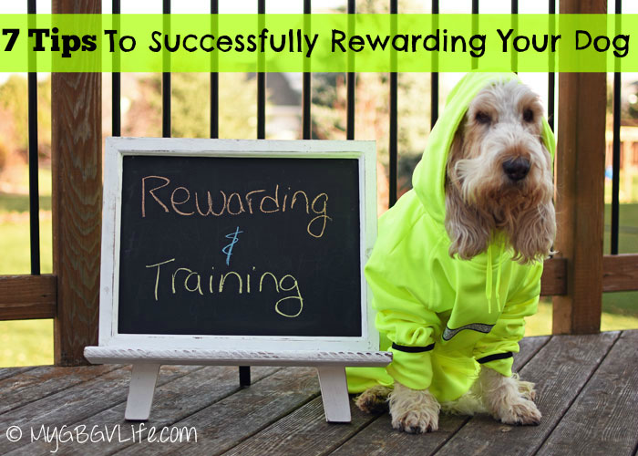 My GBGV Life 7 tips to successfully reward your dog in training