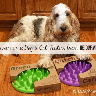 Interactive Feeders For Dogs And Cats