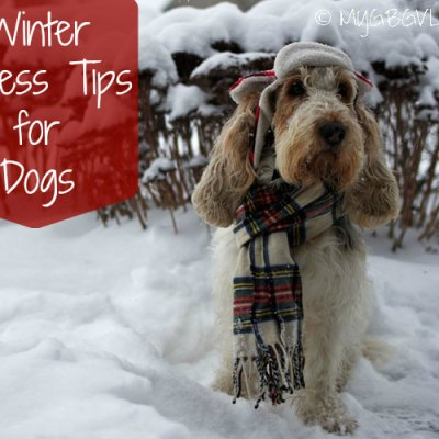 Winter Fitness Tips For Dogs