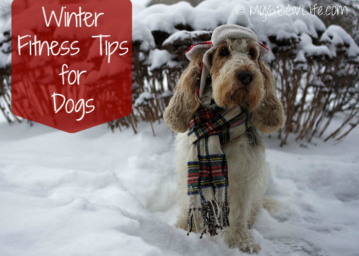 My GBGV Life Emma's winter fitness tips for dogs