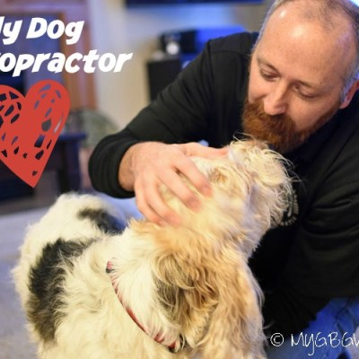 Does Your Dog Need A Dog Chiropractor?