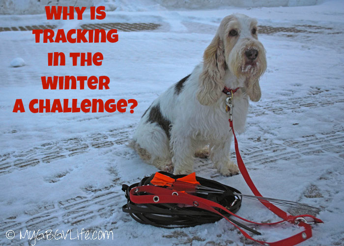 My GBGV Life What makes tracking in the winter a challenge
