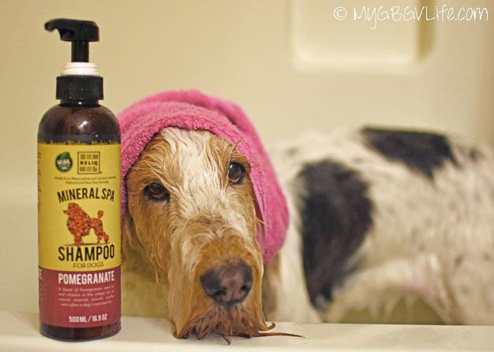 My GBGV Life Natural Tear Free Shampoo For Dogs