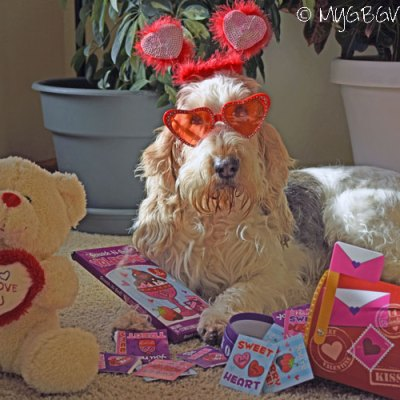 Valentines Preparations Including A #HoundHuggles Photo Contest