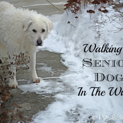 Walking A Senior Dog In The Winter