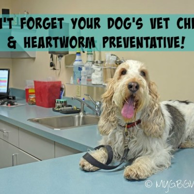 Time For Our Heartworm Preventative And Check Up