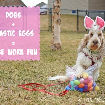 Dog Fun With 54 Plastic Easter Eggs