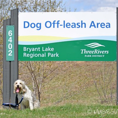 Bailie Checks Out The Bryant Lake Dog Park