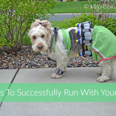 5 Tips To Successfully Run With Your Dog
