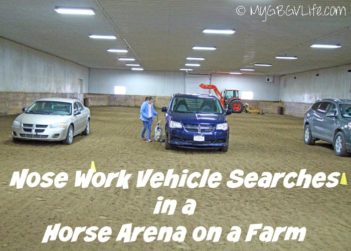 My GBGV Life Nose Work Vehicle Searches In A Horse Arena