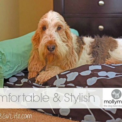 The Comfortable And Stylish Molly Mutt Bed