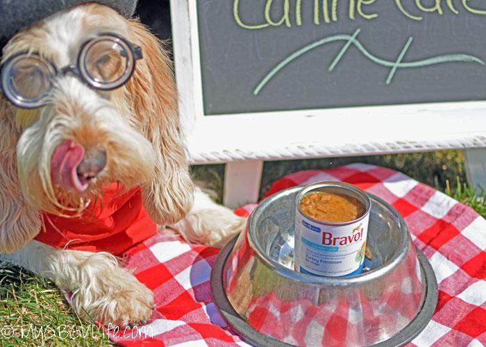 My GBGV Life Fill Your Picnic Basket with Bravo Canine Café