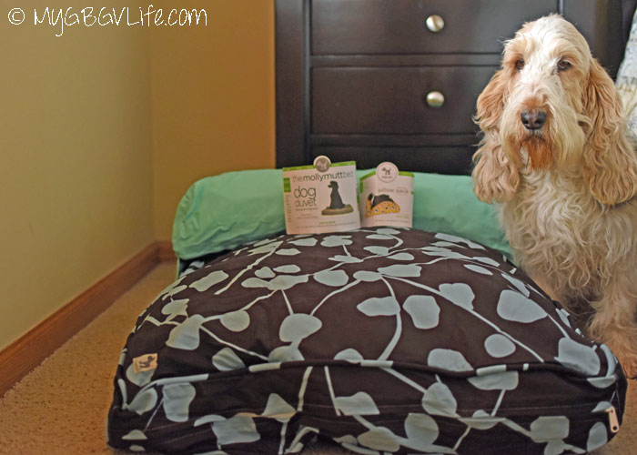 My GBGV Life The Comfortable And Stylish Molly Mutt Bed