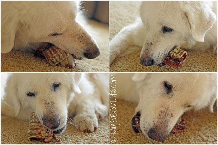 My GBGV LIfe 5 Tantalizingly Tasty All Natural Dog Chews