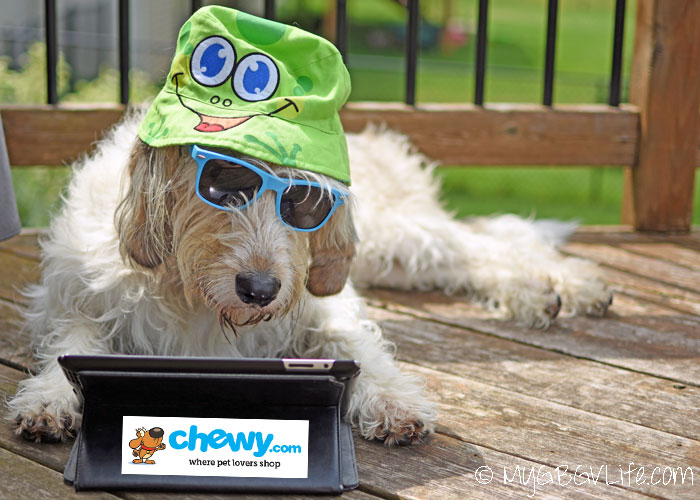 My GBGV Life Caught With ZiwiPeak Good-Dog Treats - An Undercover #ChewyInfluencer