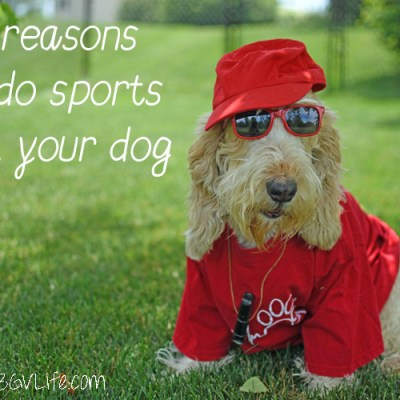 5 Reasons To Do Sports With Your Dog