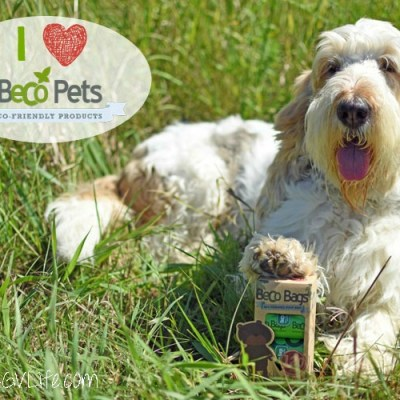 Got Bear Poop Or Dog Poop? I've Got The Solution!