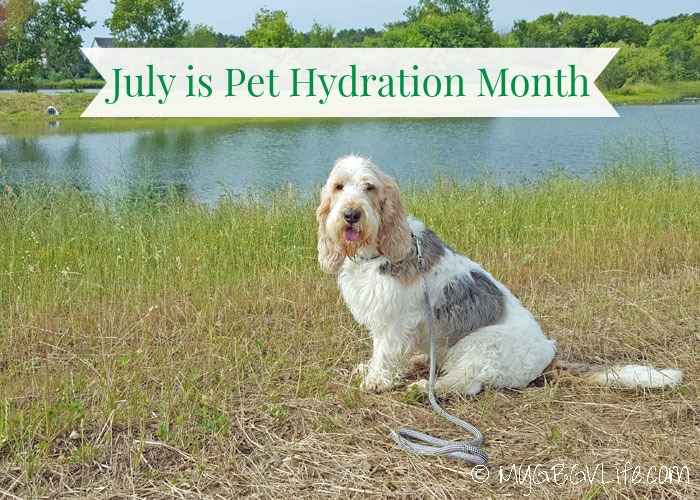 My GBGV LIfe July Is Pet Hydration Month - Is Your Pet Hydrated?