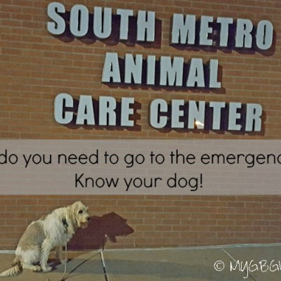 When Should You Go To The Emergency Vet? Know Your Dog!
