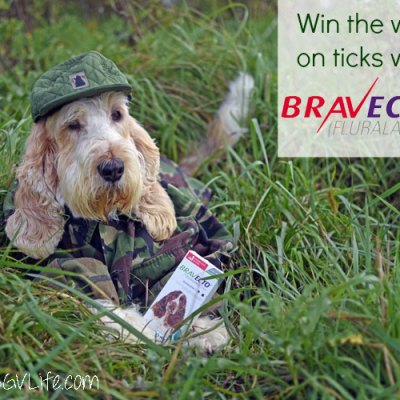 Win The War On Ticks With #12BRAVECTO