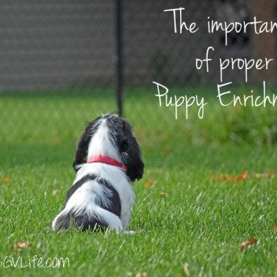 Proper Puppy Enrichment Is Important – Madison's First 2 Weeks