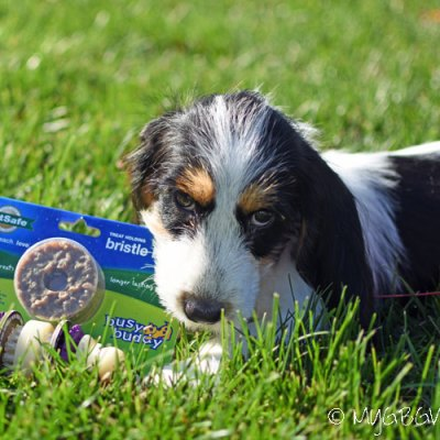 A Dog Toy And Chew All In One #ChewyInfluencer