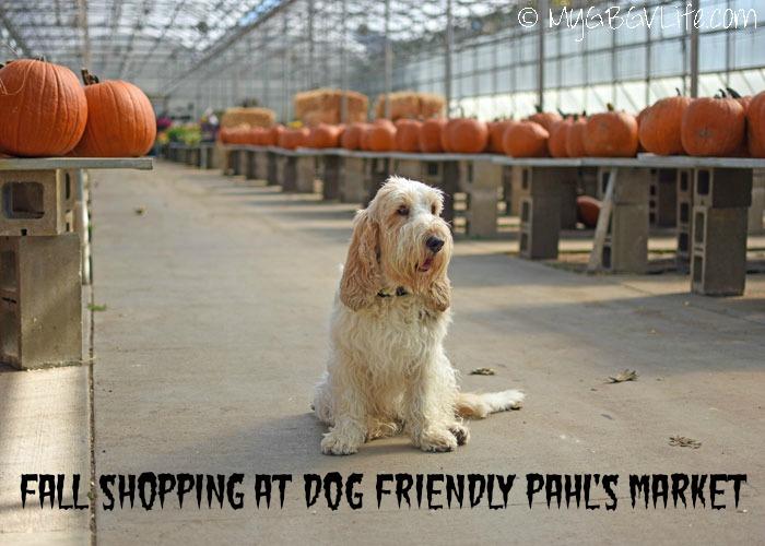 My GBGV Life Fall Shopping At Dog Friendly Pahl's Market