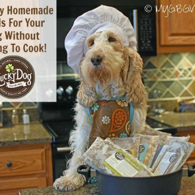 Healthy Homemade Meals For Your Dog Without Having To Cook