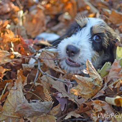 Endless Leaves And Fun For A Puppy