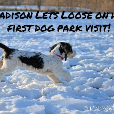 Madison Lets Loose On Her First Dog Park Visit