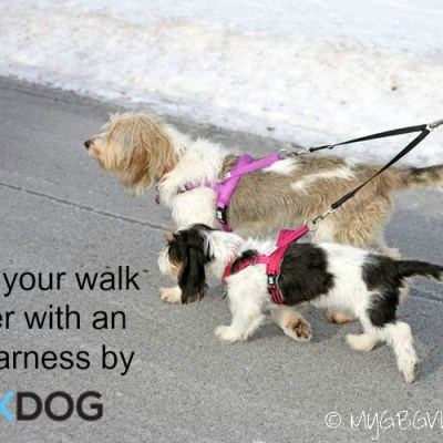 5 Reasons To Love EZHarness For Walking And Running Your Dog {Giveaway}