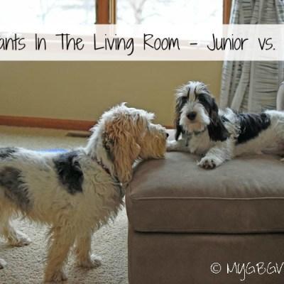 Wildpants In The Living Room – Junior vs. Senior
