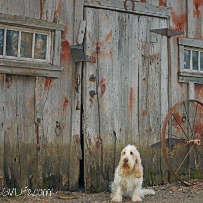 Doorways – Pet Photography Challenge Week 8