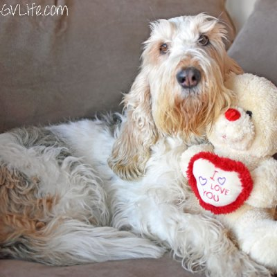 Furry Valentine's Day Wishes Full Of Love