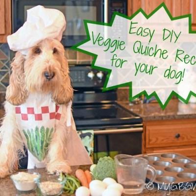 Veggie Quiche – Did You Know Real Dogs Love Quiche?