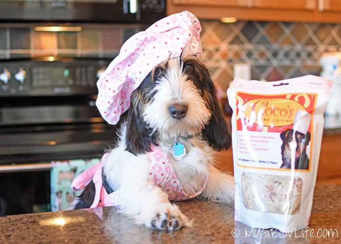 My GBGV Life Affordable, Healthy, Homemade Dog Food