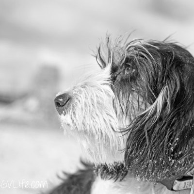 Black and White – Pet Photography Challenge Week 9