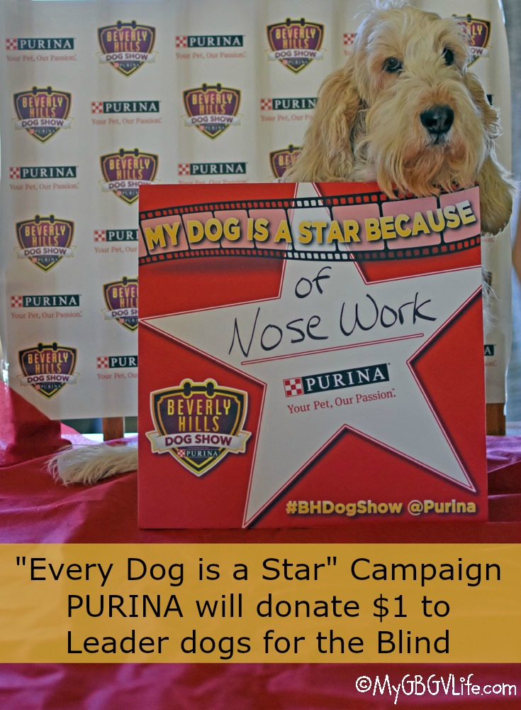 My GBGV Life Every Dog Is A Star! Why Is Your Dog A Star?